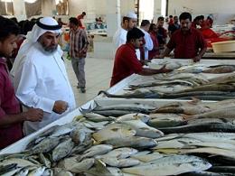 الاســـم:ارتفاع السمك براس الخيمة.jpg المشاهدات: 176 الحجـــم:62.4 كيلوبايت